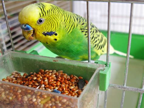 Tips To Care For Pet Birds During Winter Season Boldskycom