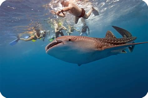 Diving Down Under: Western Australias Top Ten Marine Life