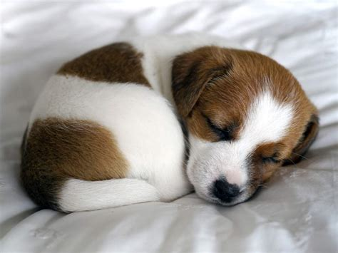 6 Things You Need to Know Before Owning a Puppy