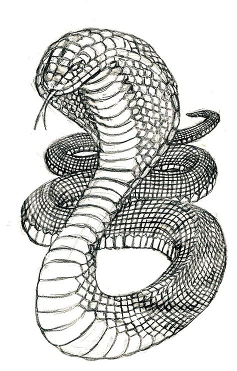 Cobra Drawing