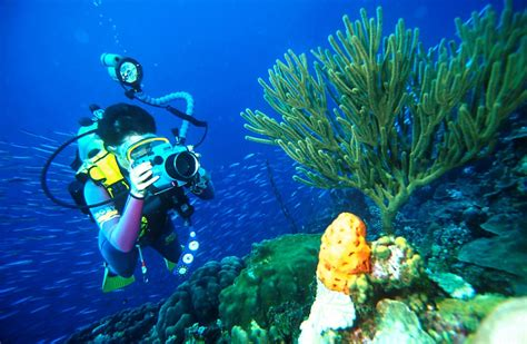 Scuba Diving The Passage Raja Ampat Islands Irian Jaya