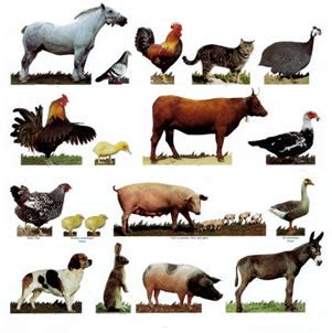 A list of phrases about animals