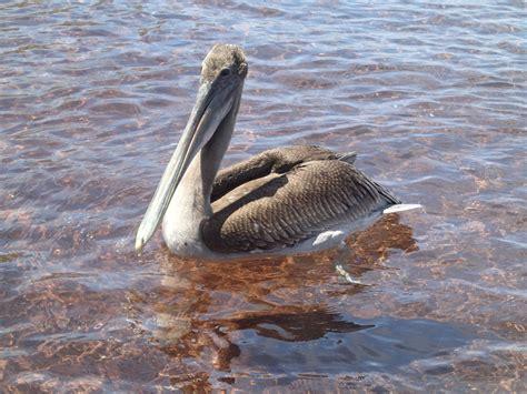 Galapagos Sea Birds Bird Encounters of a Balcony Kind