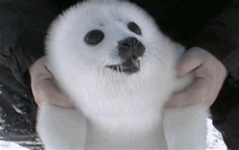 les GIFs les plus craquants avec des animaux