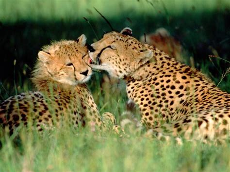 Beautiful African Animals Safaris: Endangered Beautiful