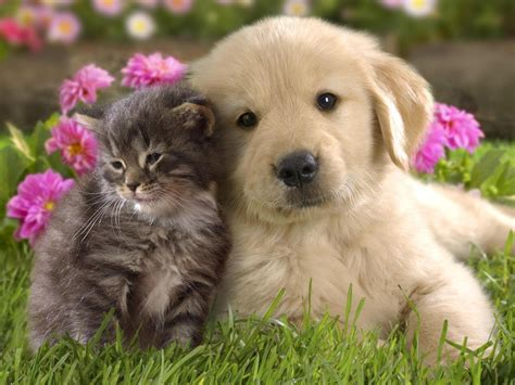 Kittens and Puppies New Photos Funny And Cute Animals