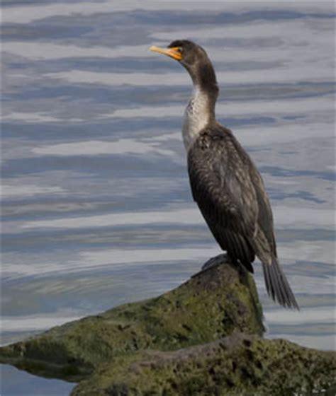 Diving Bird Diving Bird List 300x355px #171116