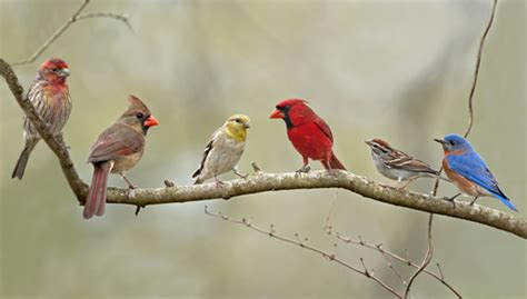 Determining the Different Bird Species