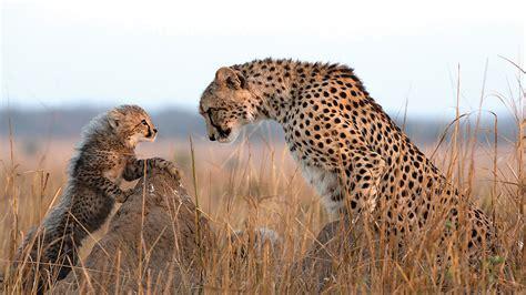 Safari game drive Pristine Wilderness of KZN andBeyond