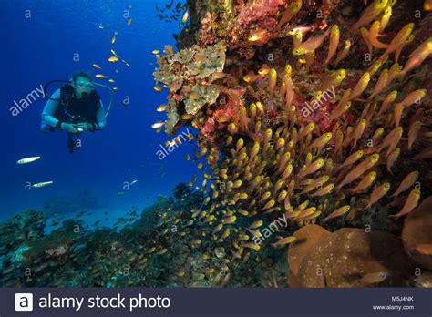 Egypt Diving Stock Photos & Egypt Diving Stock Images Alamy