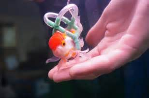 Faith in humanity restored: disabled pet fish that can't swim fitted with life jacket