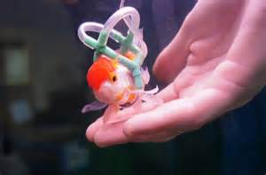 Your Daily Bit of Aaaw: Man Makes Life Vest for Pet Fish