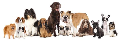 different dog breeds different dog breeds how much should