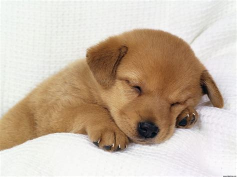 The dog in world: Photo of puppy dogs very pretty