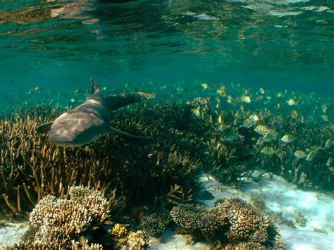 Sail Ningaloo: Ningaloo Reef Dive Liveaboard