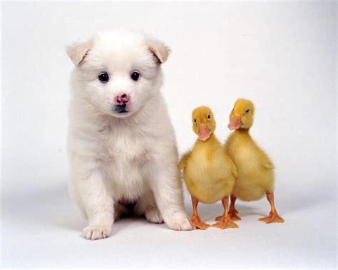 Cute Animal Wallpapers Top HD Wallpapers