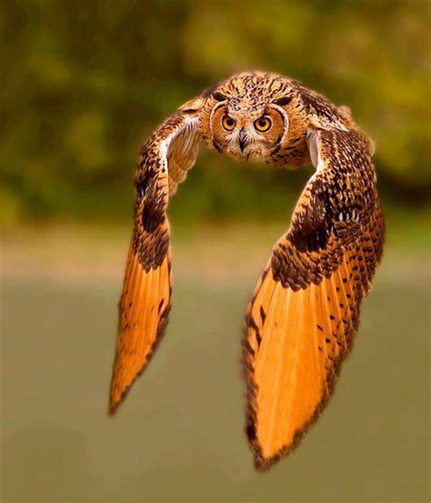 Interesting Photo of the Day: Majestic Rock Eagle Owl in