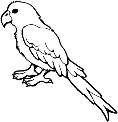 African Grey Parrot coloring page Animals Town Animal