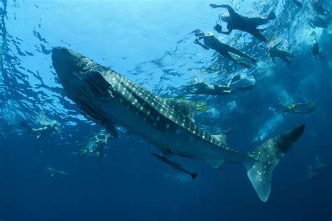 Thailand Scuba Diving All the Best Sites Dive The