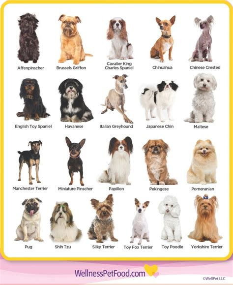 Breeds Of Dogskindofpets kindofpets