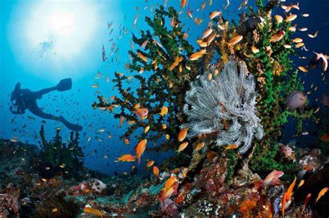 10 Diving Spot Paling Keren di Indonesia yang Wajib Kamu