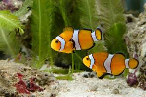 Can you handle a saltwater aquarium?