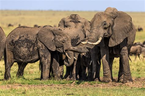 Endangered Species Day: More Endangered Animals Than Ever