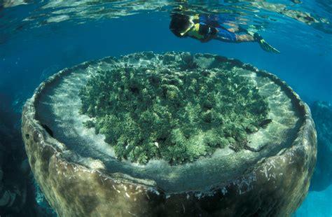 Western Australia y Ningaloo, un diving espectacular