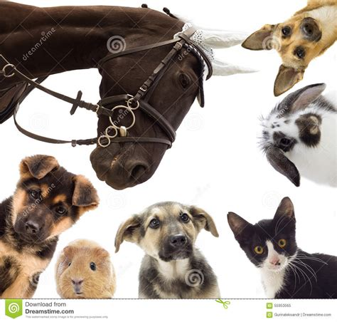 Group of different pets stock image Image of dogs, domestic 55953565