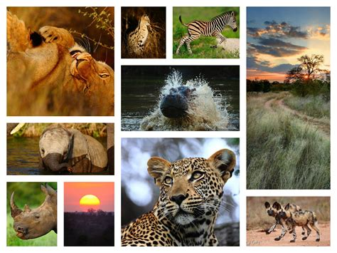 Safari In Africa Locations Get Free Image About Wiring