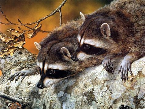 Free Desktop Wallpapers Backgrounds: Animals Wallpapers