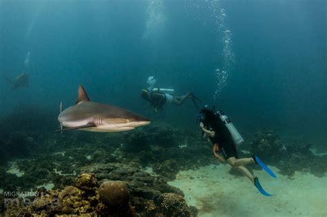 Gallery Ningaloo Reef Dive & Snorkel