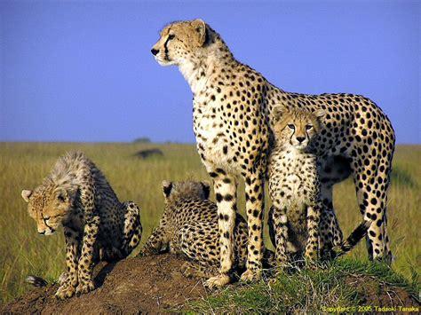 HD Animal Wallpapers: Animal Free Wallpapers