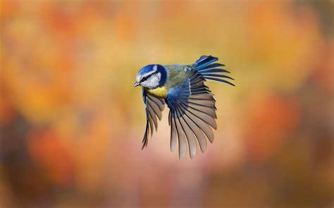 Flying Wallpaper WallpaperSafari