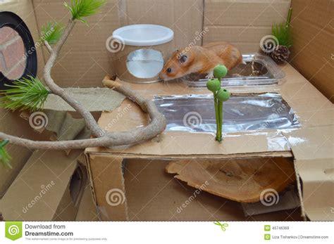 Cardboard Box Hamster Playground Stock Photo Image: 45746369