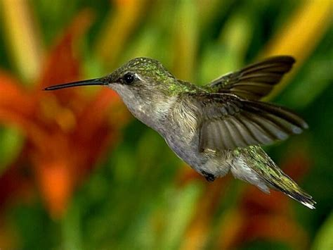 Free Desktop Wallpapers Backgrounds: 10 Beautiful Birds