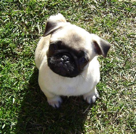 Sweet puppies screensaver : breedcomptea
