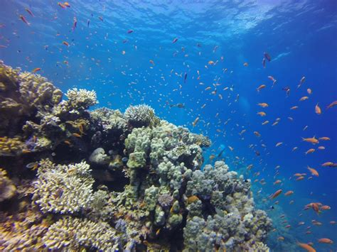 Top Dive Sites in Marsa Alam, Egypt Packing my Suitcase