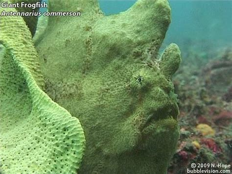 Diving the Lembeh Strait YouTube
