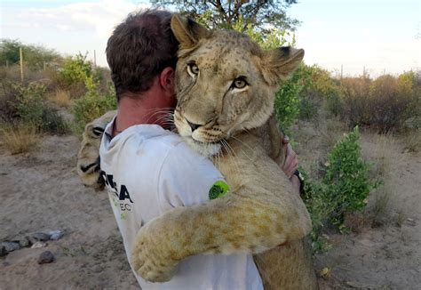 Hugging a lion duo build unbreakable bond with 110lb