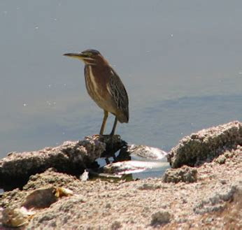 species of seabirds DriverLayer Search Engine