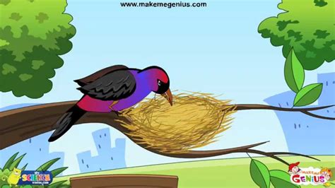 Animals' Homes, Birds' Nests for Kids YouTube