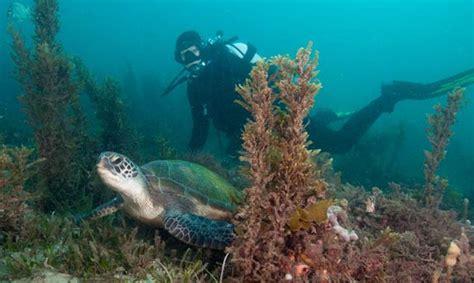 SEA LIFE Trust Kelly Tarlton's SEA LIFE Aquarium