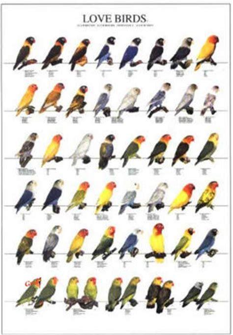 Poster Oiseaux : Les Différentes Espèces d'Inséparables n