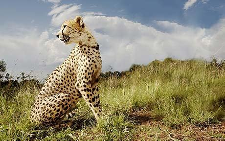 21 new species in danger of extinction, UN convention