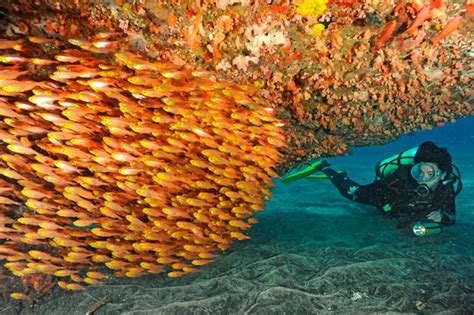 Scuba Diving in Bali, Indonesia Dive The World Vacations