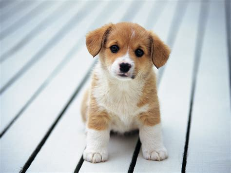 Cats and Dogs Blog: cutest breed of puppies