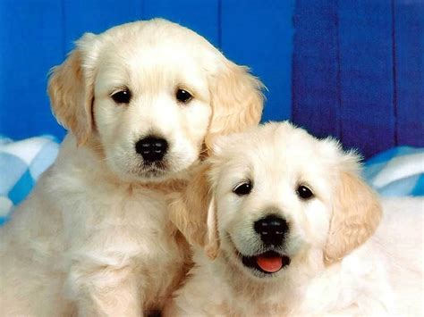 PUPPIES Publish with Glogster!