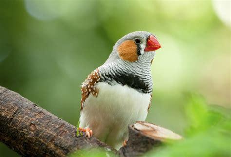 House and Garden Plaques: Birds