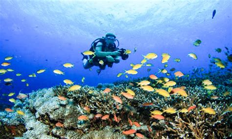 The Best 5 Diving Spot in Bali JustGoIndonesia